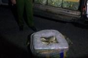 Quảng Ninh: Tiêu hủy hơn 3,5 tấn cá không có giấy tờ nguồn gốc
