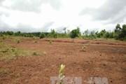 Họp báo Chính phủ thường kỳ: Quyết liệt xử lý bán đất công giá rẻ