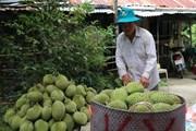Tiền Giang: Nông dân chuyên canh thu lãi hơn 1 tỷ đồng mỗi năm
