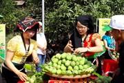 Sơn La: Tưng bừng khai mạc Ngày hội xoài Yên Châu năm 2018