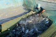 Xác định hai nhóm vấn đề ngành thủy sản cần tập trung giải quyết