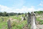 2 cán bộ bảo vệ rừng bị chém trọng thương khi giải tỏa đất