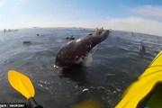 [Video] Đang chèo thuyền trên sông bị hải cẩu lao thẳng vào mặt
