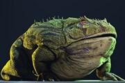 Phát hiện loài ếch cổ đại khổng lồ có thể hạ gục khủng long