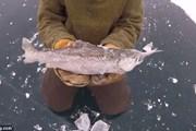 Cảnh tượng hiếm có: Cá lớn đóng băng khi đang cố nuốt cá bé