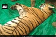 Dân làng hợp sức săn con hổ dữ giết chết 4 người dân vô tội