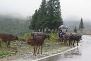 Từ 26/11, nhiệt độ ở Bắc Bộ tăng dần, Quảng Trị đến Phú Yên vẫn mưa