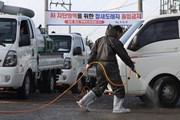 Hàn Quốc tăng cường các biện pháp phòng ngừa dịch cúm gia cầm