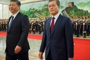 Chủ tịch Trung Quốc khẳng định coi trọng quan hệ với Hàn Quốc