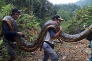 [Photo] Dân làng hồ hởi khi bắt được con trăn lớn chưa từng thấy