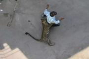 [Video] Báo hoang gây náo loạn khu dân cư, làm 3 người bị thương