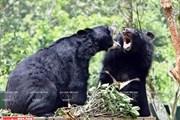 Gần 40.000 người dân Việt Nam cam kết không sử dụng mật gấu