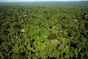Chính phủ Brazil rút lại quyết định cho khai thác mỏ ở rừng Amazon