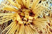 Italy tự hào với loại mỳ có thể ngăn ngừa nguy cơ nhồi máu cơ tim