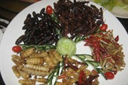 Châu Âu sắp nhập thực phẩm côn trùng châu Á, người dân Italy e ngại