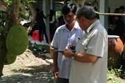 Nông dân vùng ngập lũ thu nhập hàng trăm triệu đồng nhờ mít Thái