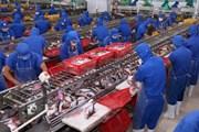 Khiếu nại cách thức tính bán phá giá của Mỹ với cá da trơn Việt Nam