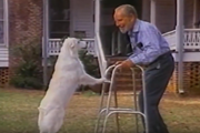 [Video] Những bộ phim cảm động về sự trung thành của loài chó