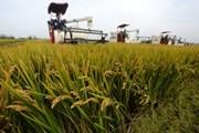 Các nước Đông Nam Á sẽ thiệt hại trầm trọng vì biến đổi khí hậu