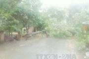 Bắc Bộ mưa lớn diện rộng, Tây Nguyên và Nam Bộ đề phòng dông lốc