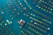 Ảnh đẹp trong tuần: Bè nuôi tôm hùm ở Phú Yên nhìn từ trên cao