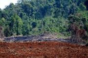 Vụ phá 15ha rừng ở Đắk Nông: Chủ rừng buông lỏng quản lý, bảo vệ