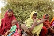 FAO cảnh báo nguy cơ mất an ninh lương thực của châu Phi