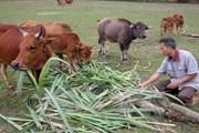 Vụ thu phí đồng cỏ ở Thanh Hóa: Yêu cầu trả lại tiền và xin lỗi dân