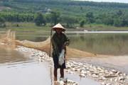 Bình Phước: Xác định nguyên nhân vụ 20 tấn cá chết ở đập Bình Hà
