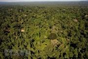 Cuba tiếp tục hoàn thành cam kết quốc tế về che phủ rừng