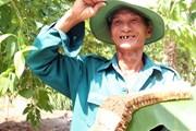 Theo chân những người làm nghề gác kèo ong mật ở U Minh Thượng
