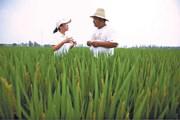 Triều Tiên muốn học mô hình phát triển nông nghiệp của Trung Quốc