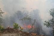 Gia Lai: Nhiều sai phạm tại Ban Quản lý rừng phòng hộ Ia Grai