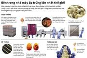 [Infographics] Bên trong nhà máy ấp trứng lớn nhất thế giới