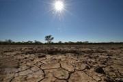 Thời tiết cực đoan đe dọa đến sản lượng ngũ cốc toàn cầu