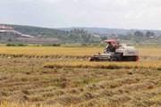 [Mega Story] Tâm lý nông dân 'dễ dãi,' liệu nông nghiệp có bền vững?