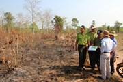 Xảy ra 12 vụ cháy tại khu rừng phòng hộ Dầu Tiếng trong dịp Tết