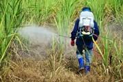 Tòa án EU ủng hộ lệnh cấm các thuốc trừ sâu gây hại cho loài ong