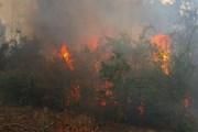 Thừa Thiên-Huế: Huy động hơn 200 người dập cháy 2ha rừng thông