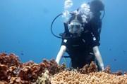 Thích thú tour lặn ngắm kỳ quan cổng Tò Vò dưới nước