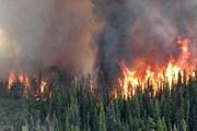 Hơn 560 vụ cháy lớn nhỏ, Canada phải ban bố tình trạng khẩn cấp