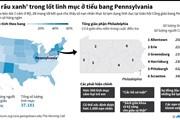 [Infographics] Các ''yêu râu xanh'' đội lốt linh mục ở Mỹ
