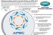 [Infographics] Những hoạt động chính trong Tuần lễ Cấp cao APEC 2017