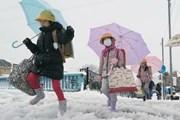 Thủ đô Tokyo của Nhật Bản chuẩn bị đón đợt tuyết rơi dày