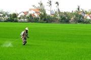 Cả nước tập trung sản xuất vụ Đông Xuân và rau màu vụ Xuân
