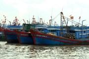 Đưa vào bờ an toàn 11 ngư dân trên tàu cá bị chìm ở Quảng Ngãi