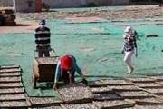 Quảng Trị đề xuất hỗ trợ ngư dân tồn đọng hải sản do sự cố biển