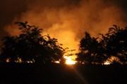 Rừng tràm thuộc Thành phố Hồ Chí Minh cháy dữ dội