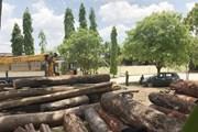 Truy quét đối tượng khai thác gỗ trái phép ở Vườn Quốc gia Yok Đôn