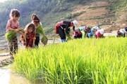 1,7 triệu trẻ em Việt Nam lao động ở khu vực kinh tế phi chính thức